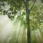 Natuur park Medvednica