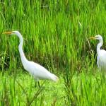 Bird watching - Inland