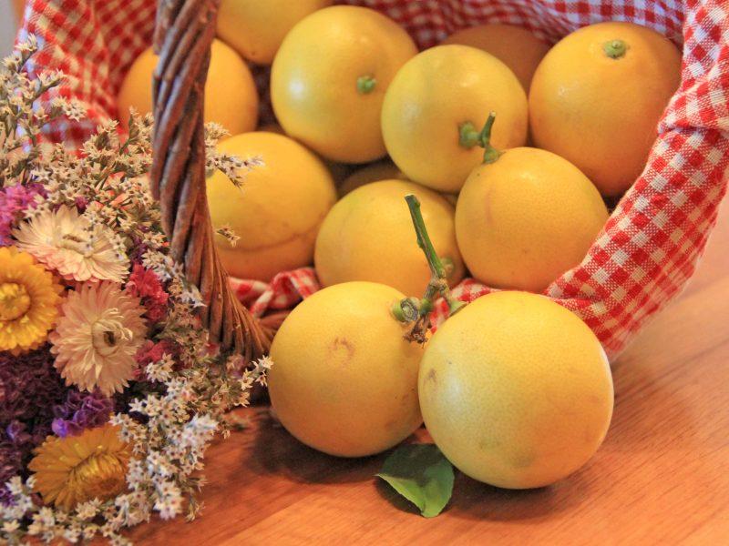 Lemons from Neretva delta near Dubrovnik