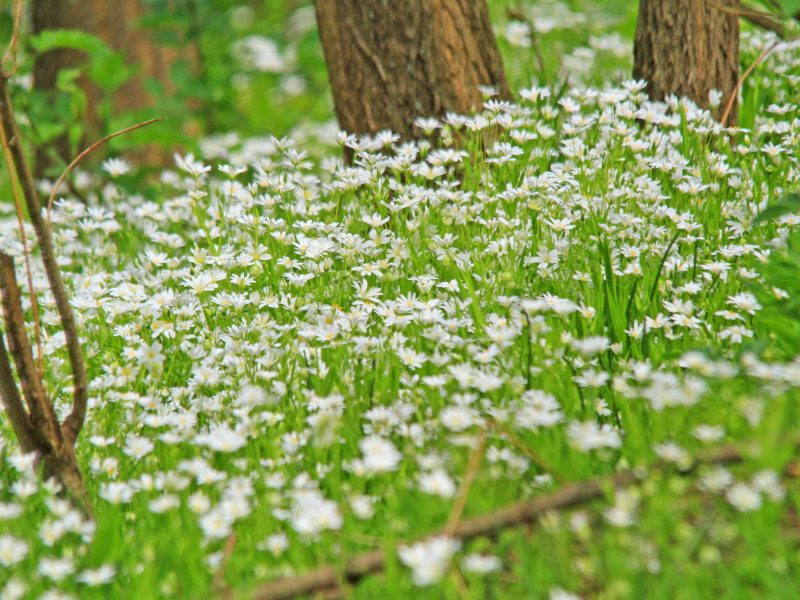 spring flowers in wood
