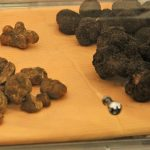 White and black truffles